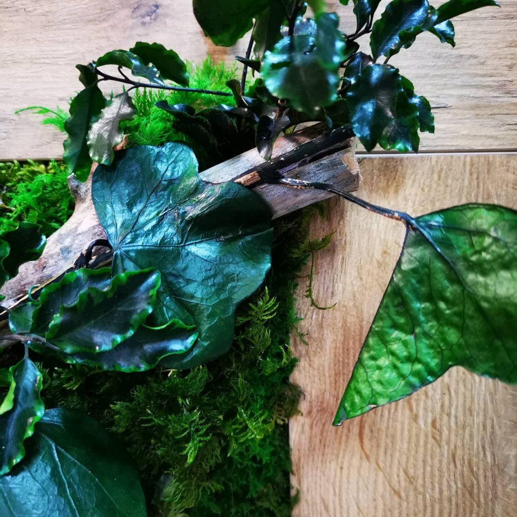 Atelier mchu kompozycje z roślinami