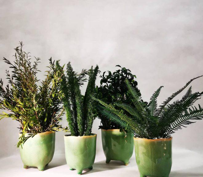 Rośliny stabilizowane w doniczkach