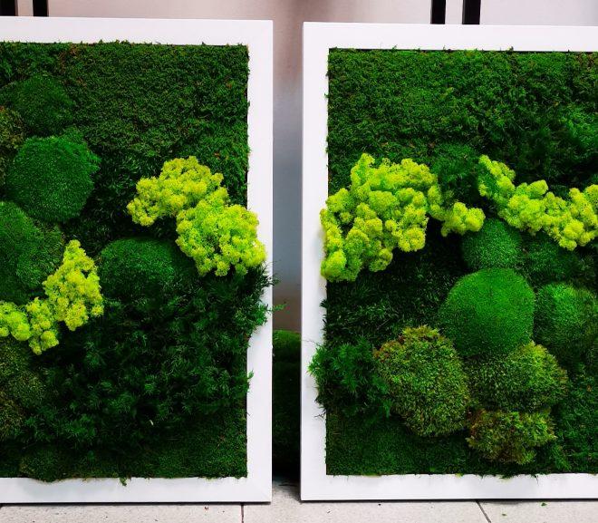 Zielone obrazy-rafa
