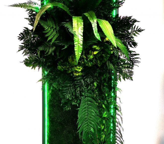 Rośliny stabilizowane w połączeniu z oświetleniem