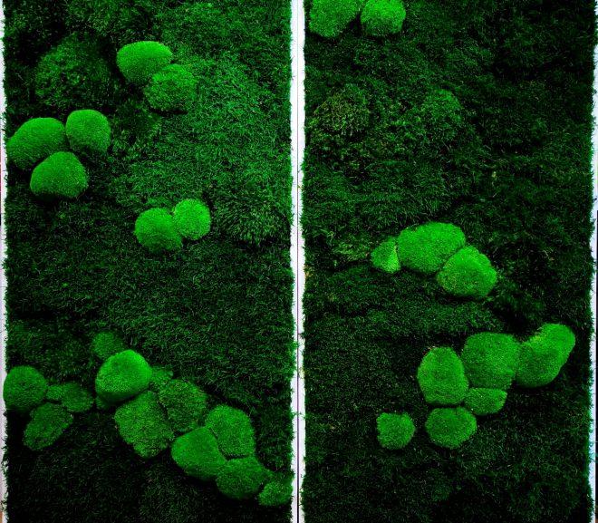 """Dwie prace z cyklu """"zielony obraz"""" ."""